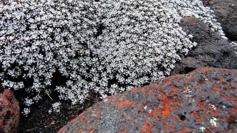 Small Wildflowers & Lichen
