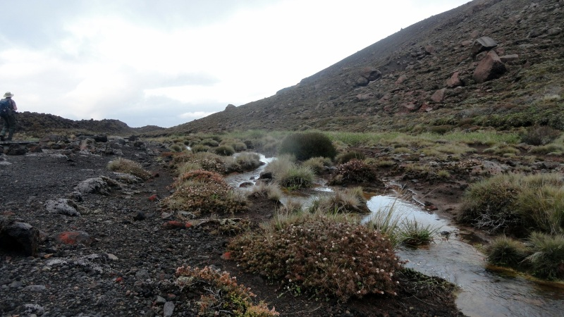 Stream Along Tongariro Crossing Trail