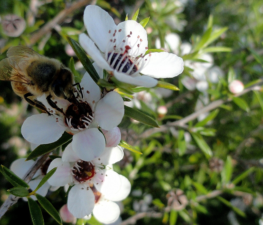 Busy Bee Flowers 3