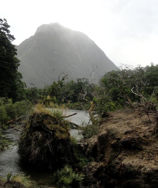 Fallen Tree Along Track