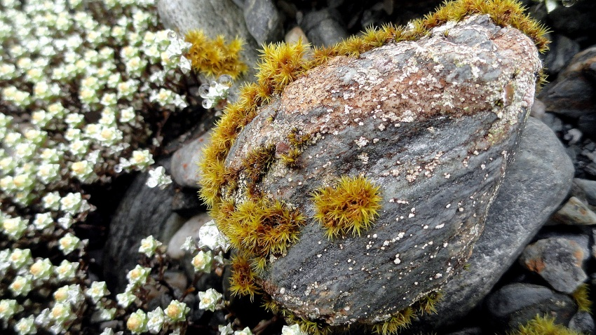 Rock Lichen & Flower