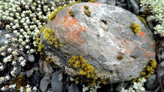 Rock & Lichen