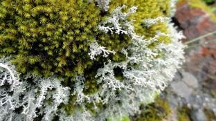 Rock w Green & White Moss