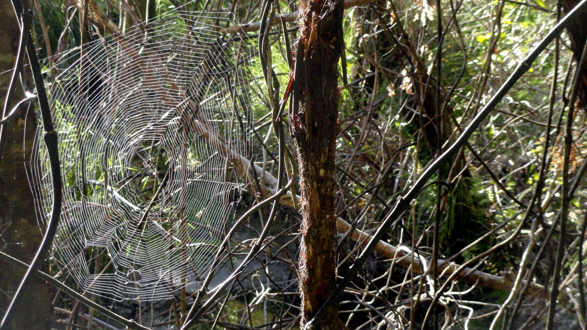 Web at Awaroa