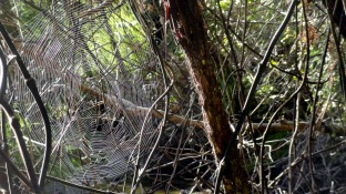Web2 at Awaroa