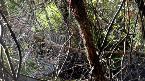 Web2 at Awaroa