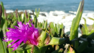 Ice Plant & Breakers