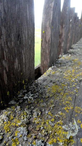 Lichen & Old Wood - Petaluma Adobe