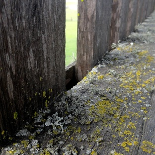 Lichen & Old Wood - Petaluma Adobe