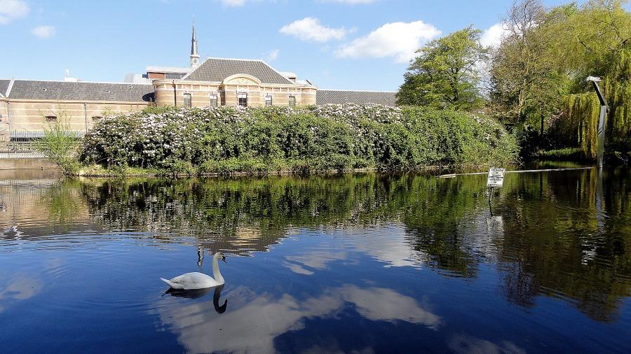 Paleis Tuin Pond Swan