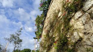 Greenery & Stone Wall