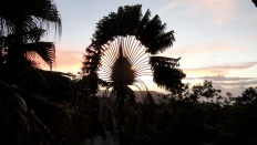 Sunset Palm - Montagne Noire