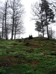 Alingsas Forest inSpring