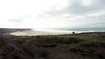 Ano Nuevo Coast1