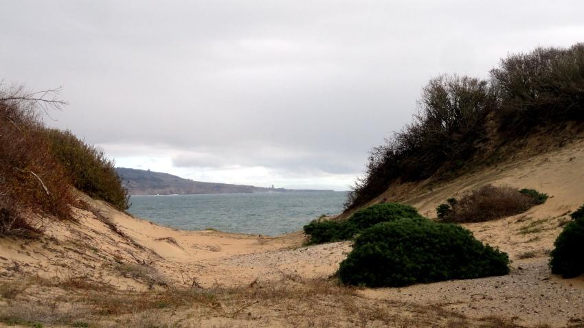 Ano Nuevo Coast5