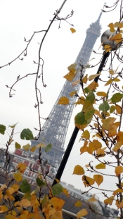 Eiffel Tower w Autumn Leaves
