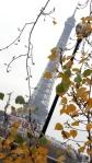 Eiffel Tower w AutumnLeaves