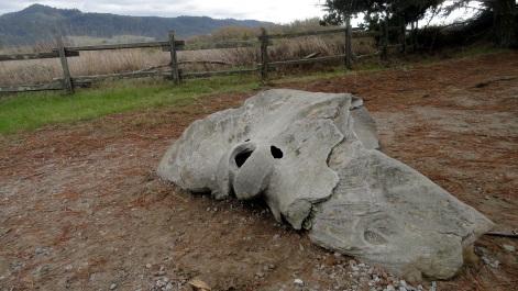 Petrified Whale Skull Fragment
