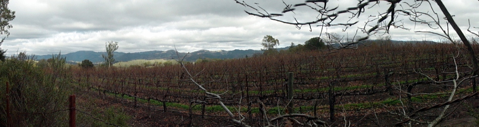 Jack London SHP Vineyard