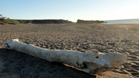 Sonoma Coast 4