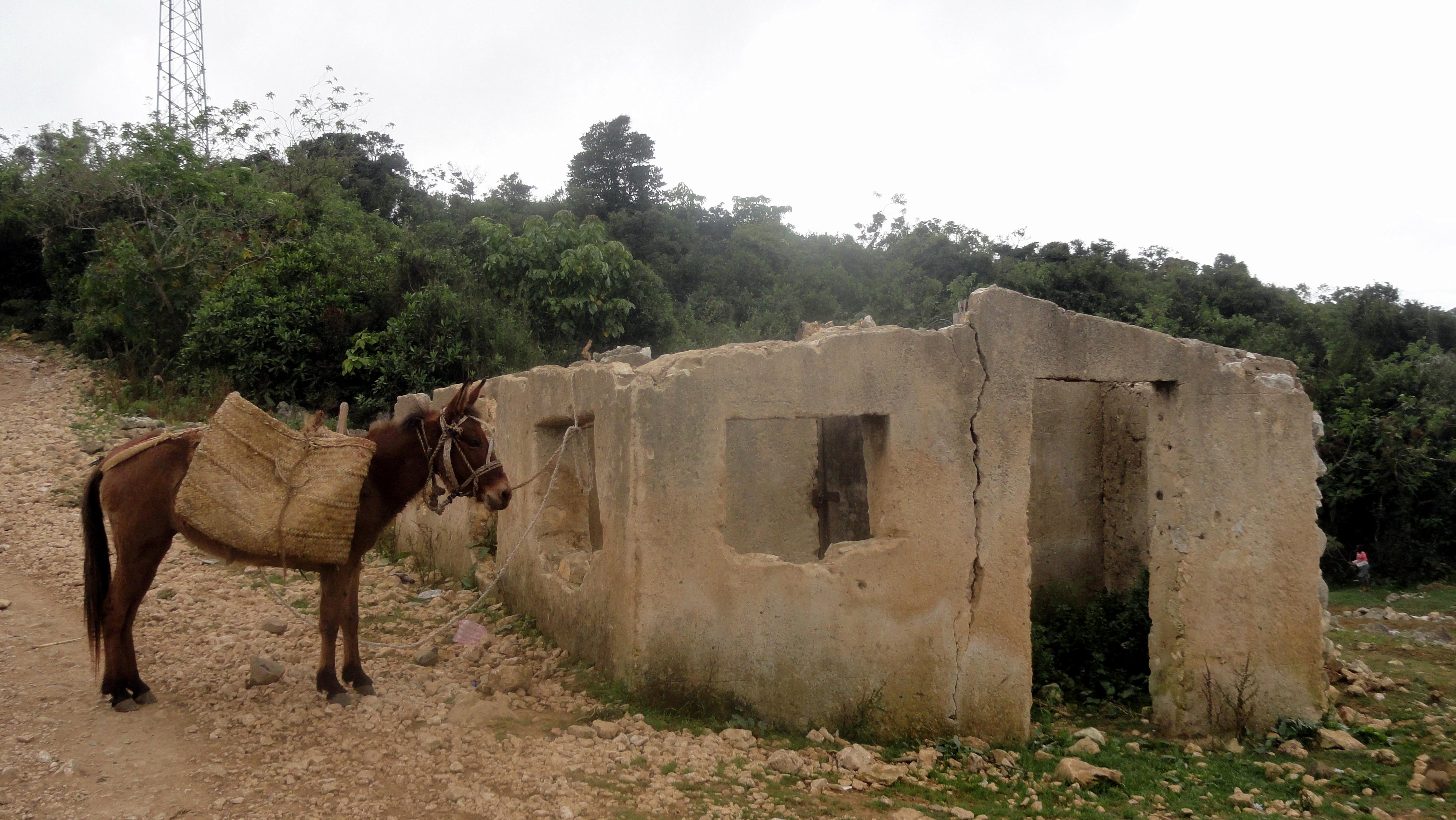 Donkey Waiting