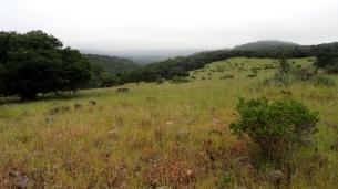 Annadell Hillside 2