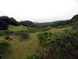 Annadell Hillside 3