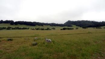 Annadell Hillside 4