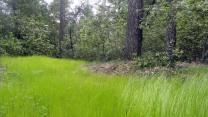 New Grass at Hood Mtn Park 2