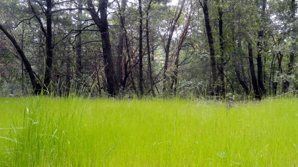 New Grass at Hood Mtn Park