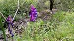 Purple Flower &Creek