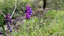 Purple Flower & Creek
