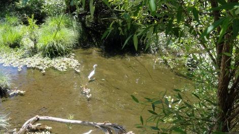 Santa Rosa Creek Bike Path 1