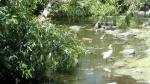 Santa Rosa Creek Bike Path3