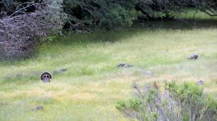 Turkey from Richardson Trail 1