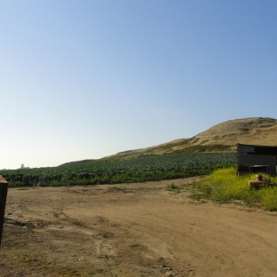 Agriculture in the Hills 2