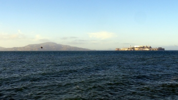 Angel & Alcatraz from Marina