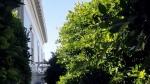 Balcony – Cornice –Trees