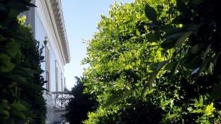 Balcony - Cornice - Trees