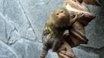 artis-tiny-monkey-3