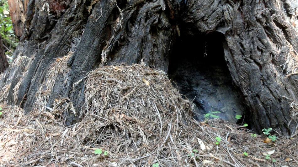 grass-bark