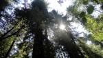 sun-through-the-canopy-2