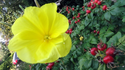 garden-flowers-1