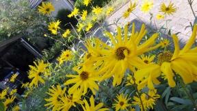 garden-flowers-2