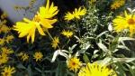 garden-flowers-3