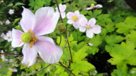 garden-flowers-4