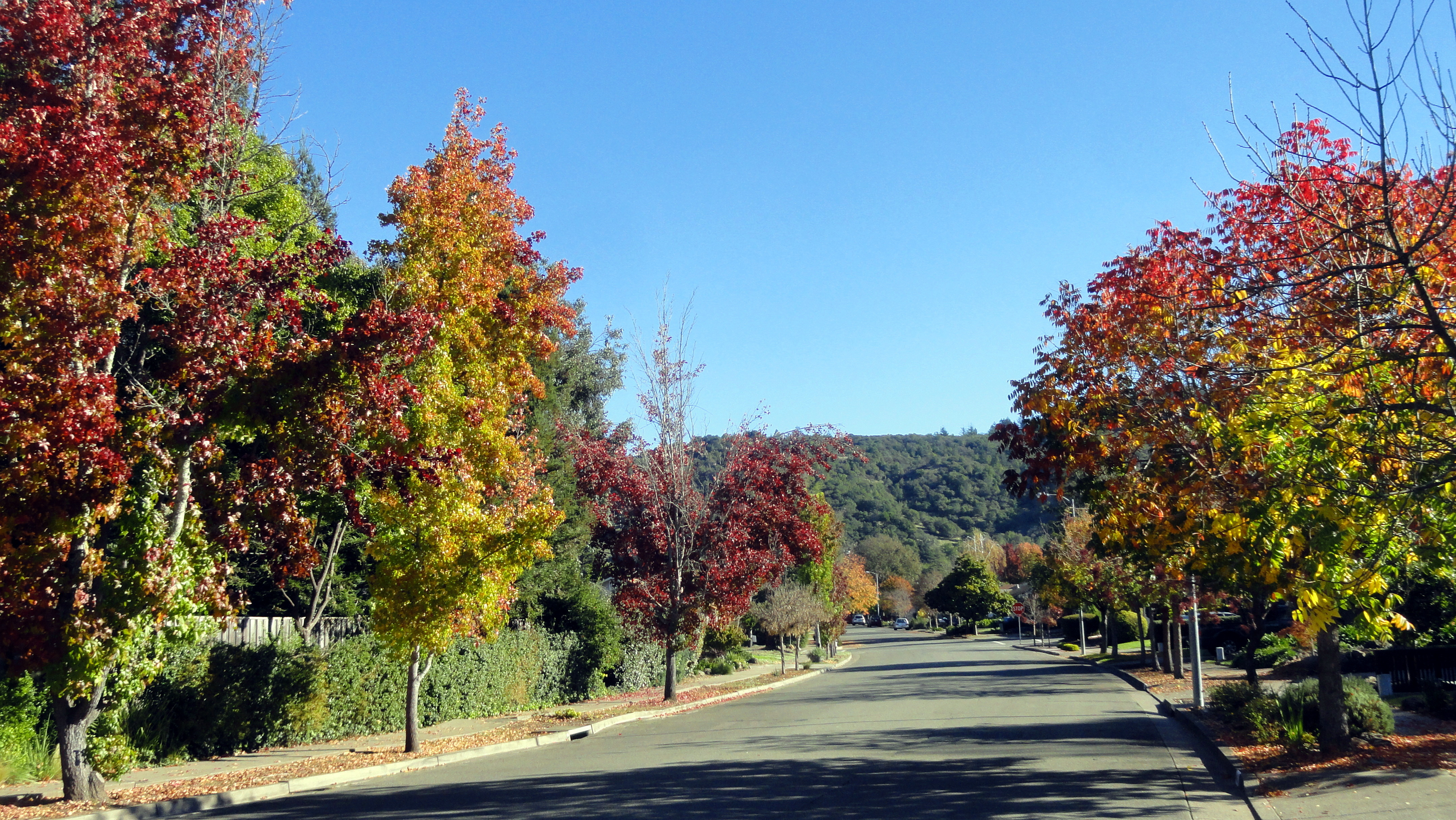 autumn-color