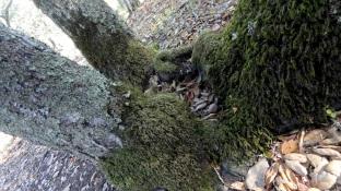 tree-bole-1