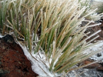 icy-grass-on-alpine-crossing-2
