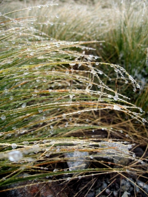 icy-grass-on-alpine-crossing
